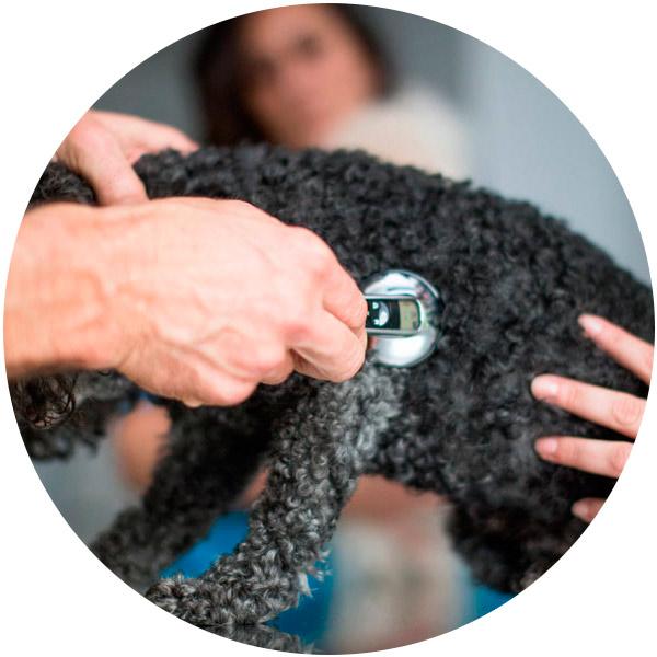 clinica delta perro negro